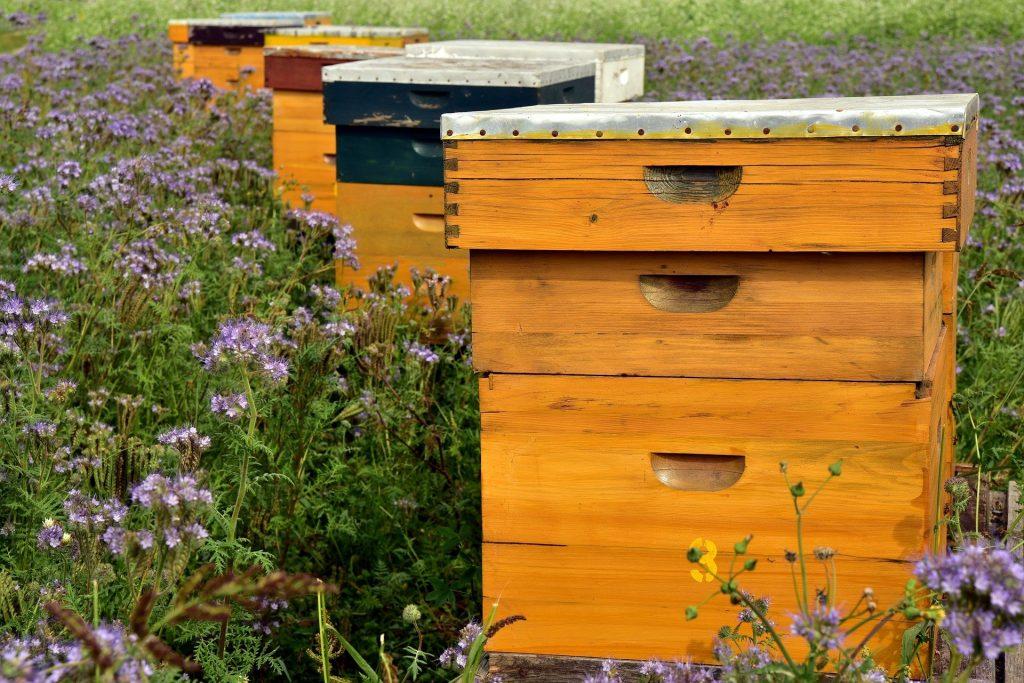beehive 3703426 1920